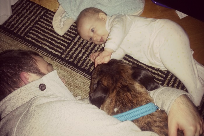 babies and staffies