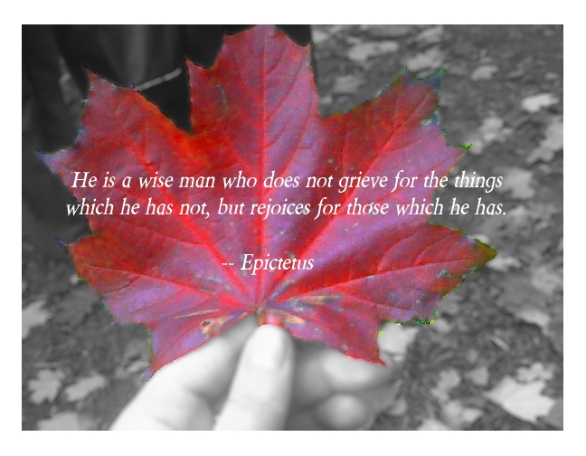 He is a wise man who does not grieve for the things which he has not, but rejoices for those which he has. Epictetus